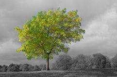 Green tree and stormy sky Royalty Free Stock Photos