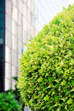 Green tree on a street in the city Royalty Free Stock Images