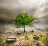 Green tree among the stumps Stock Photography