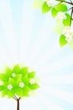 Green tree and sun rays Stock Photo