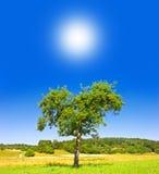 Green tree on sunny blue sky Stock Photography