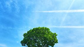 Green tree in a sunny day. Sun rays tree leaves sky brunch green blue white coror streak contrails clouds leaf park forest daylight summer summertime beauty royalty free stock photos