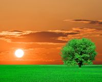 Green tree on sunset Stock Photo