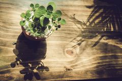 Green tree on the table. At the cafe Stock Image