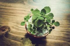 Green tree on the table. At the cafe Royalty Free Stock Photos