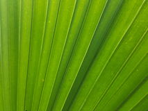 Green tree. Texture background pattern leaf abstract Stock Photo