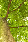 Green tree top Stock Photography