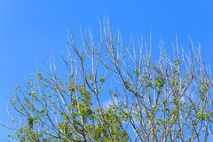 Green tree top line over blue sky background. In summer Royalty Free Stock Photography