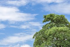 Green tree top line over blue sky and clouds. Background in summer, copy space for text Stock Photos