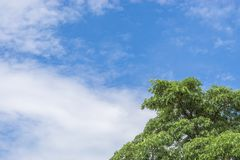 Green tree top line over blue sky and clouds. Background in summer, copy space for text Stock Image