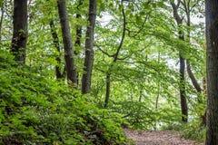 Green tree tops, looking up. In Berlin, Germnay Royalty Free Stock Image
