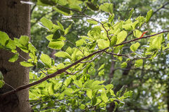 Green tree tops, looking up. In Berlin, Germnay Royalty Free Stock Images