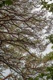 Green tree tops, looking up. In Berlin, Germnay Royalty Free Stock Photos
