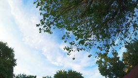 Green tree tops and sky with clouds turning oround.  stock footage