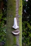 Tree trunk with a face on it Stock Photos