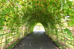 Green Tree tunnel. In garden Stock Image