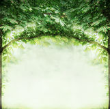 Green Tree twigs arch, summer nature background Stock Photo