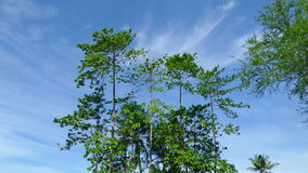 Green tree under bright blue sky Royalty Free Stock Photo