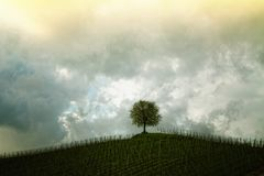 Green Tree Under the Grey and Yellow Sky Stock Photography