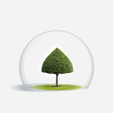 Green Tree is under the protection Royalty Free Stock Photo