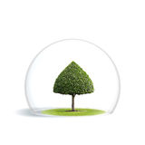 Green Tree is under the protection Stock Images