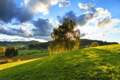 Green Tree Under Sunny Cloudy Royalty Free Stock Photos