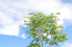 A green tree under the super green sky. A green tree under the super green sky in the morning Stock Photo