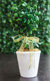 Decorate vase. Green tree in vase on table againt green background Stock Photo