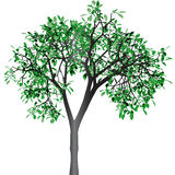 Green tree. Vector. Stock Images