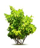 Green tree. Vector Stock Photo
