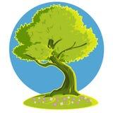 Green tree. Vector illustration. flowering tree Stock Illustration