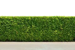 Green tree wall fence texture Royalty Free Stock Photography