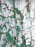 Green, Tree, Wall, Texture Stock Photography
