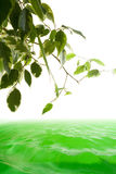 Green tree and water. Ecology concept with water and tree Stock Photography