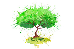 Green tree watercolor vector colorful background Royalty Free Stock Image