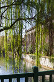 Green tree and waterfront of canal in Vicenza Stock Images