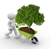 Green tree  in wheelbarrow Stock Photos