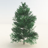 Green Tree On White royalty free stock photography