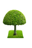 Green tree on white background Stock Photo