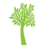 Green tree on white background. Green tree with leaves on white background Stock Images