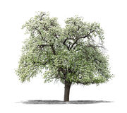 Green tree on a white background stock image