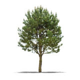 Green tree on a white background Royalty Free Stock Images