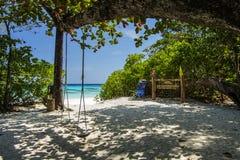 Green tree on white sand beach Stock Image