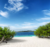 Green tree on  white sand beach Royalty Free Stock Photography