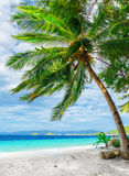 Green tree on  white sand beach Royalty Free Stock Image