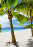 Green tree on  white sand beach. Malcapuya island, Stock Images