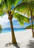 Green tree on  white sand beach. Malcapuya island, Stock Images