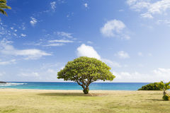 Green Tree on White Sand Near Sea Shore Royalty Free Stock Photography