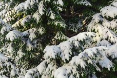 Green tree on it with white snow. In the background sky, winter, cold Stock Photo