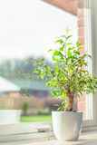 Green tree in a window Royalty Free Stock Images